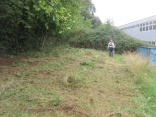brush cutting long grass bordering the woodland
