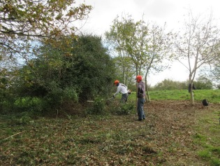 trees and grassland benefit when bramble is cut back