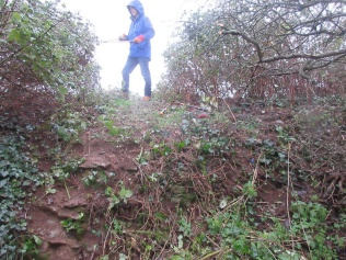 cutting back scrub at the top of a former woodland trail to restore access