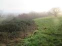 bramble encroaching into grassland