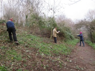 clearing brambles and more buddleia