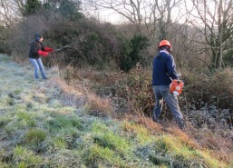 clearing brambles on a frosty morning