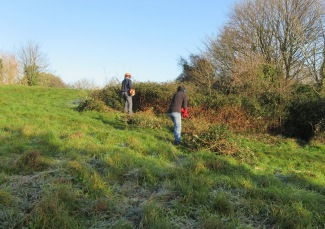 cutting back encroaching bramble