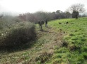 the bramble patch reduced