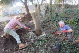 cutting down the stump