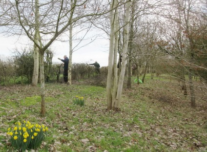 hedge cutting at Quinney's Wood