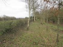 the cut hedge so far ...
