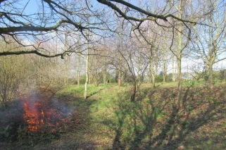 cutting the hedge and burning the arisings