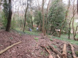 more of the woodland is now accessible