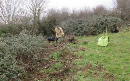 raking up cut bramble and grubbed wild radish