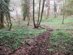 the bluebells will soon be flowering