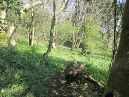the extended woodland trail invites exploration