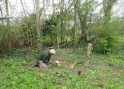 thinning out elm saplings