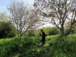 brush-cutting access to the walnut trees