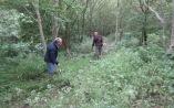 brush cutting and raking along the lower path