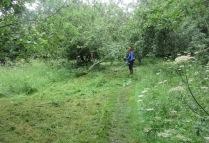 brush-cutting rank vegetation