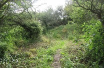 Church Hill quarry cleared of nettles