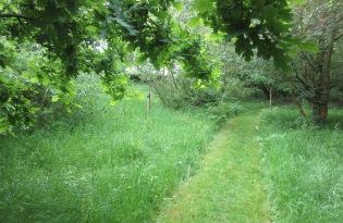 the grass path mown