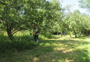 brush cutting the orchard floor