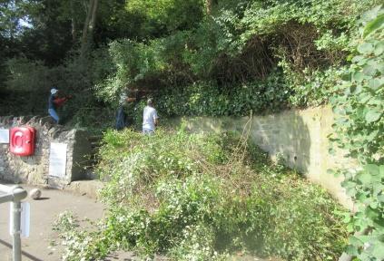 cutting back overgrown shrubs