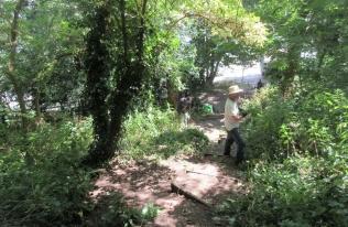 nettle pulling beside the woodland steps