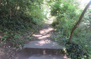 steps and woodland path near the Salthouse Pub tidied