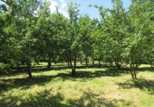 the orchard's looking good