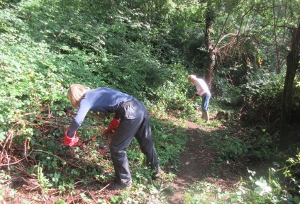 cutting back encroaching brambles