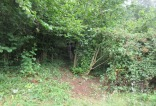 informal access to the woodland cleared of brambles