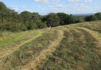 both hill tops have been tractor mown prior to baling