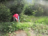 clearing the fir tree of brambles