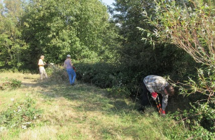 cutting brambles