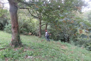 mowing nettles on the lower slope of Wain's Hill
