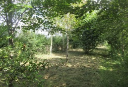 the woodland floor brush cut between the top hedge and path