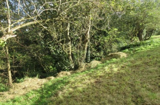 cut grass to be raked down into the woodland for habitat piles
