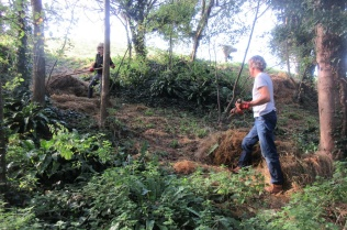 raking down cut grass into the woodland