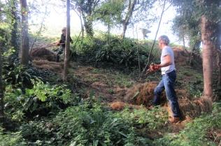 raking down cut grass into the woodland