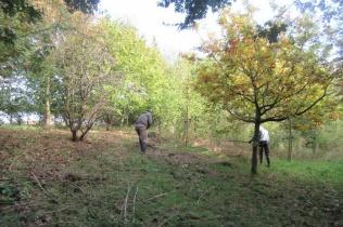 raking off mown vegetation