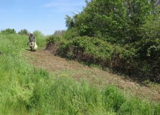 reclaiming grassland by cutting back and grubbing out invasive brambles