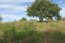 tree shoots in grassland to be trimmed