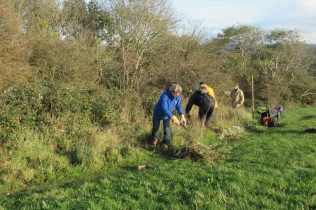 scrub clearance - cutting back brambles