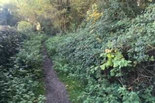 cemetery allotment path in need of clearing