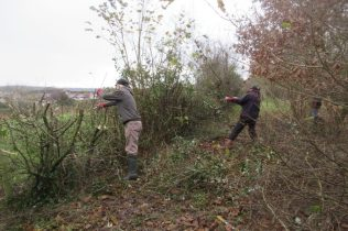 more hedge cutting, with brambles entangled