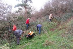 clearing nettles and ivy in the old quarry