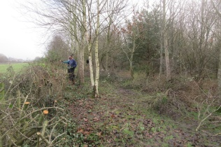cutting the hedge in Quinney's Wood