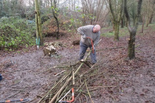 hazel coppicing and cutting up