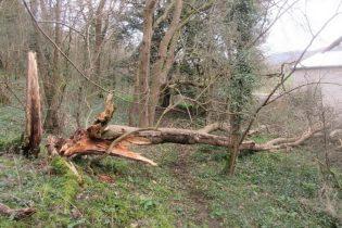 an ash has fallen over the trail