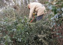 cutting up Holm oak branches for habitat piles