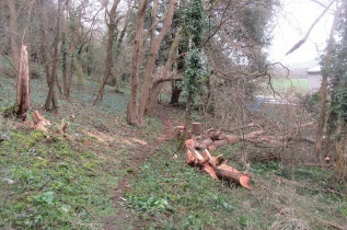 the trail open again after the fallen ash is cut up