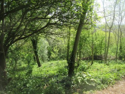 Church Hill woodland glade